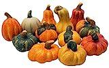khevga Herbstdeko Zierkürbis Deko-Kürbisse aus Terracotta 12er S