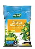Westland Zitruspflanzen Erde, 8 l – Erde mit Tongranulat für gesunde Zitronenpflanzen, Zitruserde zur optimalen Wasser- und Nährstoffversorgung