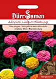 Dürr Samen 0743 Zinnie Lilliput Mischung (Zinniensamen)