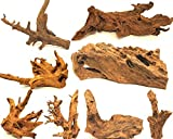 Wohnkult Mangrovenwurzel XL 45-60 cm Deko Aquarium Wurzel Holz Mang
