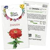 Zinnien Samen: Premium Zinnia Elegans Samen für 60 blühende Zinnien Pflanzen – Zinnie Samen – Bunte Blumensamen – Blumenwiese Samen und Balkonblumen Samen – Saatgut Blumen – Samen Bienen von OwnGrow