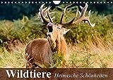 Wildtiere. Heimische Schönheiten (Wandkalender 2022 DIN A4 quer)