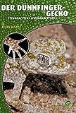 Dünnfingergecko: Stenodactylus Sthenodactylus (Art für Art)