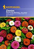 Sperli Blumensamen Zinnien kleinblumige Mischung, grü