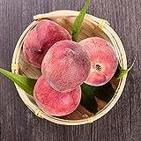FStening 2 Stück Pink Charming Fresh Pfirsich Samen Voller Nährstoffe Sind Essentielle Früchte In Der Küche Einzigartiger Geschmack Der Von Den Menschen Geliebt W