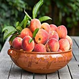 FStening 2 Stück Rosa Non GMO Erbstück Pfirsich Samen Für Die Bepflanzung Im Innenbereich Im Freien Einfache Geeignete Anfänger Für Den Betrieb Zu H
