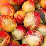 FStening 5 Stück Attraktive Ideale Pfirsich Samen Epidermis Smooth Hairless Ist Eine Speziell Gezüchtete Sorte Für Die Gartenbepflanzung Und Bringt Erfolgserleb