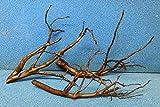 40-45 cm Moorkienwurzel Moorkienholz Garnelenbäumchen W