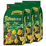 3 Sack Zitruserde Bodengold á 15 L = 45 Liter Spezialerde für Zitrusfrü